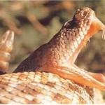Thực hư chuyện loài rắn thường bị mù mắt vào mùa hè