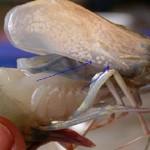 Bệnh đốm trắng (WSSV) trên tôm biển: giải pháp phòng chống dịch bệnh