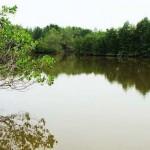 10 xu hướng trong tương lai về sản phẩm thủy sản bền vững