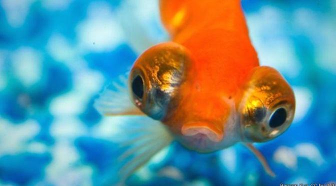 Bốn bí mật bất ngờ về cá cảnh