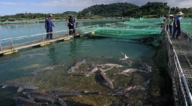 Báo nước ngoài viết về doanh nhân nuôi cá tầm ở Việt Nam