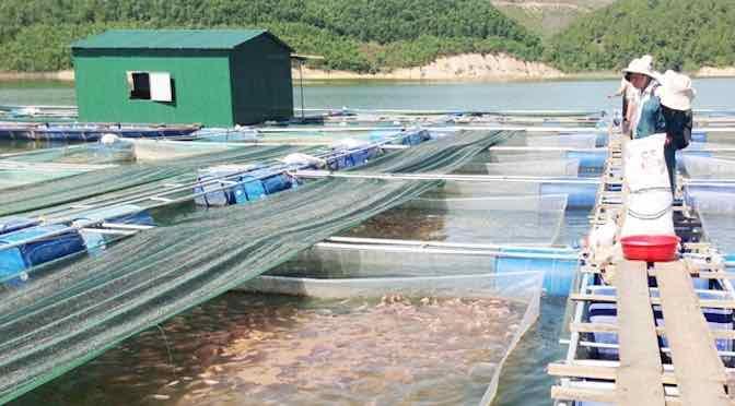 Nuôi trồng thủy sản xen ghép lãi cao