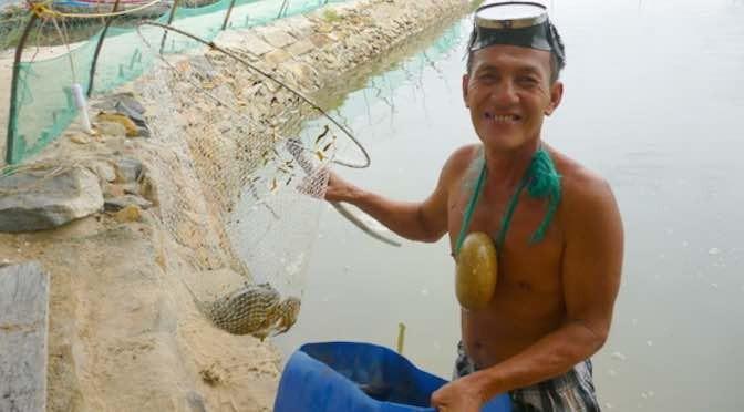 Hiệu quả từ mô hình nuôi cua xanh thương phẩm kết hợp với tôm