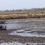 Quản lý ao nuôi tôm đất phèn