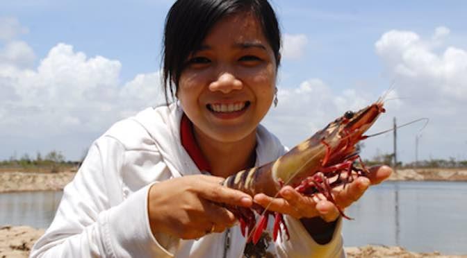 Ngành tôm Việt Nam: Chủ động để bền vững