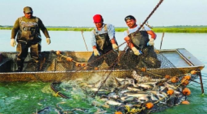 Nuôi trồng thủy sản: Những sáng kiến mang dấu ấn khoa học