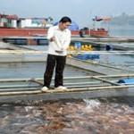 Nuôi cá lồng trên lòng hồ thủy điện Hòa Bình