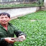 Đồng hành cùng nhà nông: Cách nuôi ba ba gai hiệu quả