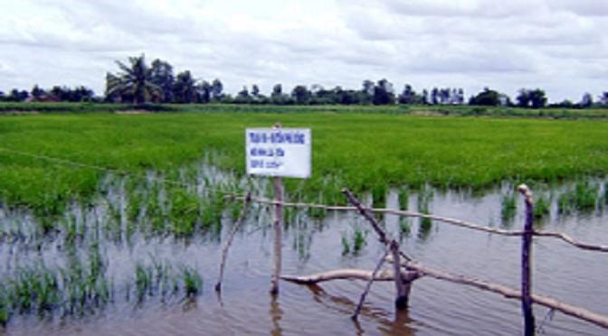 Mô hình luân canh tôm – lúa, nhiều ưu thế phát triển