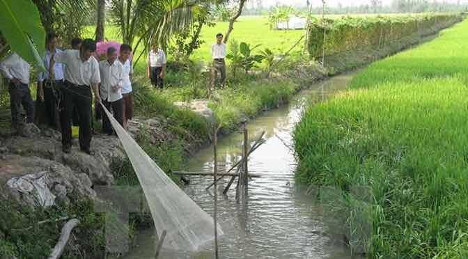 Mô hình sản xuất kết hợp cá – lúa