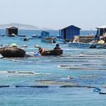 Nghề nuôi tôm hùm thương phẩm ở Nhơn Hải