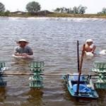 Quy trình nuôi tôm nước lợ an toàn trong vùng dịch bệnh
