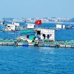Nuôi trồng thủy sản ở đảo Lý Sơn