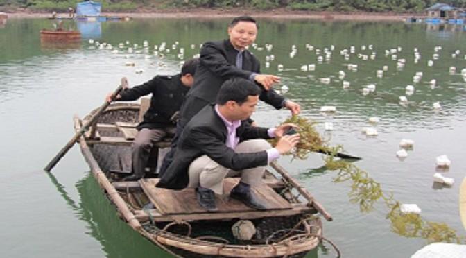 Phát triển rong sụn ở Quảng Ninh, cơ hội không thể bỏ qua