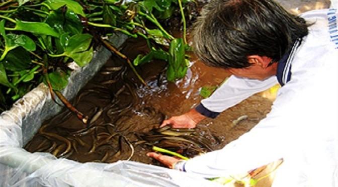 Phòng trị bệnh cho lươn