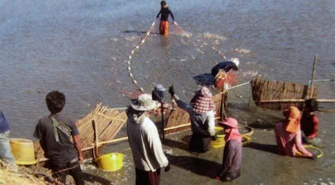 Câu chuyện thành công ở Thái Lan: Thực hành nuôi tôm không theo tập quán