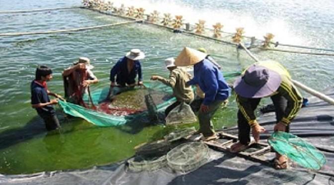 Thay đổi cách thức nuôi thủy sản để tránh Hội chứng tôm chết sớm