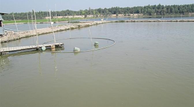 Lưu ý độ trong, độ đục ao nuôi thủy sản