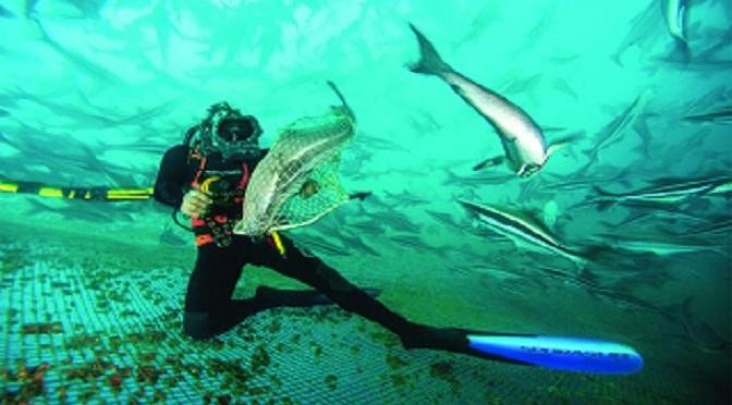 Phát triển bền vững – thân thiện môi trường: Tương lai ngành nuôi trồng thủy sản