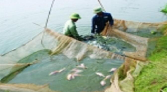 10 lưu ý quan trọng trong nuôi cá
