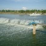 Hạn chế bệnh trên tôm nước lợ – Vấn đề cần quan tâm