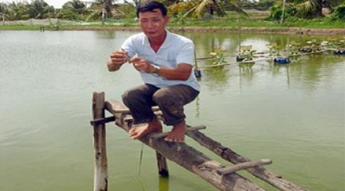 Kinh nghiệm nuôi tôm nước lợ trong mùa mưa