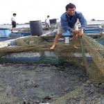 Phương pháp nuôi cá mú cọp bằng lồng bè