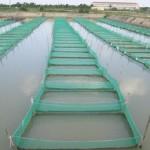 Quản lý sản phẩm xử lý, cải tạo môi trường dùng trong nuôi trồng thủy sản