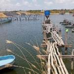 Nuôi tôm thành công trong hệ thống Semi-bioflocs ở Java – Indonesia