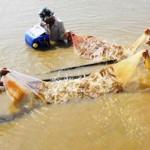 Vì sao chi phí nuôi tôm ở Việt Nam cao?