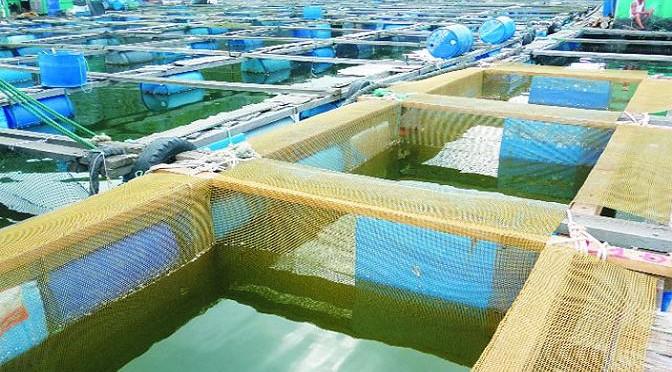 Công nghệ mới trong nuôi cá biển