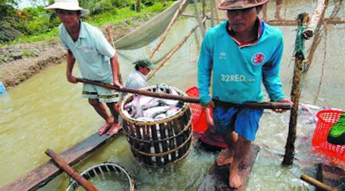 Người nuôi cá tra đòi công bằng