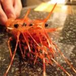 Astaxanthin – chất tạo màu sắc cho vỏ tôm