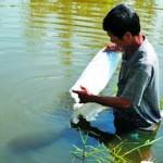 Lưu ý yếu tố môi trường khi thả tôm sú giống