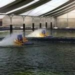 Phương pháp quản lý cơ bản trong nuôi tôm biển bằng công nghệ biofloc tại Mỹ