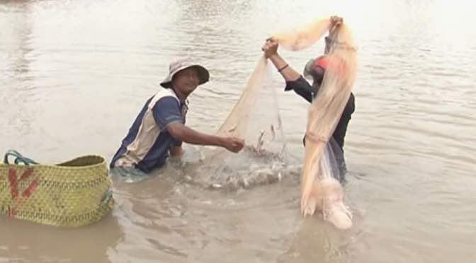 Lợi ích khi nuôi cá rô phi ghép với tôm nước lợ