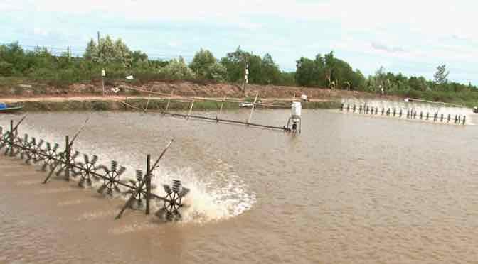 Những vấn đề thường gặp trong nuôi tôm mùa mưa