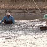 Người nuôi tôm cần nâng cao ý thức cộng đồng trong xử lý chất thải môi trường