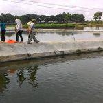Một số biện pháp kỹ thuật nuôi cá rô phi đơn tính đực qua đông