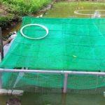 Một số thông tin kỹ thuật nuôi lươn thương phẩm trong lồng đặt trong ao đất