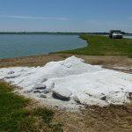 Công dụng của muối trong nuôi thủy sản nước ngọt (tiếp theo)