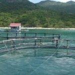 Tìm hiểu về bệnh ở cá ngừ nuôi lồng và biện pháp phòng trị