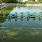 Tảo độc trong ao nuôi tôm và biện pháp quản lý