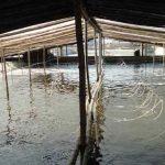 Phòng bệnh cho động vật thủy sản trong mùa nắng nóng