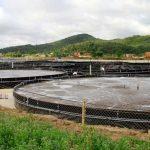 Hiệu quả mô hình nuôi tôm công nghiệp trong bể