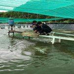 Mô hình nuôi tôm Việt – Úc siêu tiết kiệm, siêu lợi nhuận